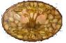 logo graines pepse